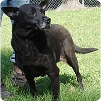 Cattle Dog Mix Dog for adoption in Havana, Florida - Tara
