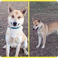 Adopt A Pet :: Hayes - Plano, TX