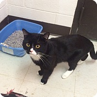 Adopt A Pet :: Tucker - Willington, CT