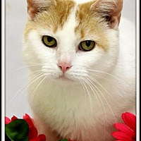 Adopt A Pet :: CHILI! - Owenboro, KY