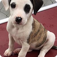 Adopt A Pet :: Target - Edisto Island, SC
