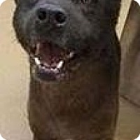 Adopt A Pet :: Rickles - Beverly Hills, CA