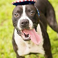 Adopt A Pet :: Jethro - Seattle, WA