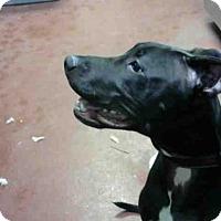 Adopt A Pet :: OLIVER - Atlanta, GA
