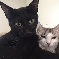 Adopt A Pet :: SNAP - Owenboro, KY