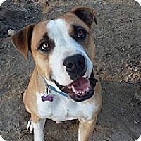 Adopt A Pet :: Pumpkin - Fowler, CA