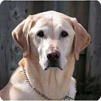 Adopt A Pet :: Bogey - Rigaud, QC