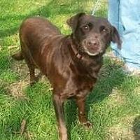 Adopt A Pet :: essie - Prestonsburg, KY