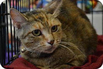 Domestic Shorthair Cat for adoption in Beachwood, Ohio - Tori