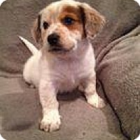Adopt A Pet :: Nattie - Marlton, NJ