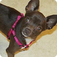 Adopt A Pet :: Pebbles - Franklin, VA