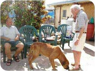 Coonhound (Unknown Type) Mix Dog for adoption in Miami Beach, Florida - Gomer, FL