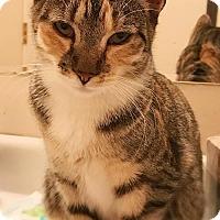 Adopt A Pet :: Briella *Video* - Philadelphia, PA