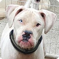 Adopt A Pet :: Harvey - Tuttle, OK