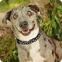 Adopt A Pet :: Bowie - Conroe, TX