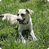 Adopt A Pet :: Tesa - Sparta, NJ