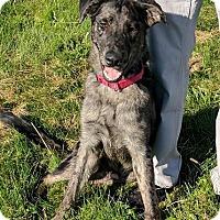 Adopt A Pet :: Remus - Lisbon, OH