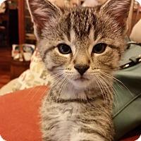 Adopt A Pet :: Boca - LaGrange Park, IL