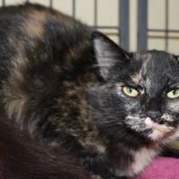 Adopt A Pet :: Sarah - Columbus, NC