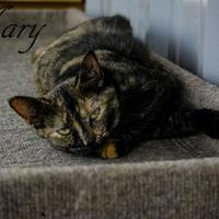 Adopt A Pet :: Mary - Winchester, TN