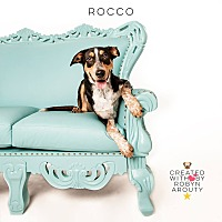 Adopt A Pet :: Rocco - Boston, MA