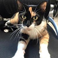 Adopt A Pet :: Zebra - Westwood, NJ
