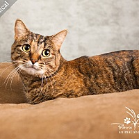 Adopt A Pet :: Meowsical *$20 Fee* - Ottawa, KS