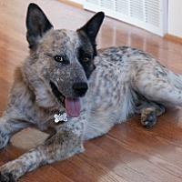 Adopt A Pet :: Ozzie - Polson, MT