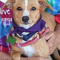 Adopt A Pet :: Nina - Springfield, MO