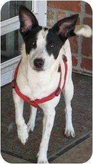 Terrier (Unknown Type, Medium) Mix Dog for adoption in Columbus, Nebraska - Lydia