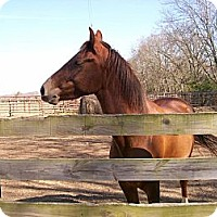 Adopt A Pet :: Cookie - Lyles, TN