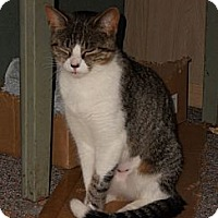Adopt A Pet :: Louise - New Egypt, NJ