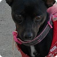 Adopt A Pet :: Spencer #5237 - Jerome, ID
