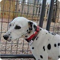 Adopt A Pet :: Donna - Newcastle, OK