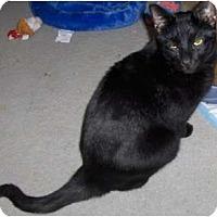 Adopt A Pet :: Jet - Richmond, VA
