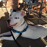 Adopt A Pet :: Jack - New York, NY