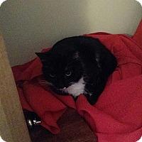 Adopt A Pet :: James - Clay, NY
