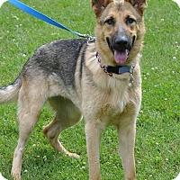 German Shepherd Dog Puppy for adoption in Mt. Airy, Maryland - Sadie