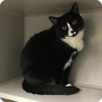 Adopt A Pet :: Mumma - E. Brookfield, MA