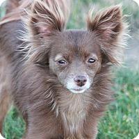 Adopt A Pet :: Emily - Lodi, CA