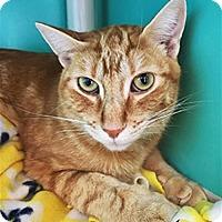 Adopt A Pet :: Brother 221192 & Jerry 221142 - Petaluma, CA