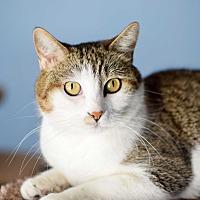 Adopt A Pet :: Creamy - Boise, ID