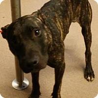 Adopt A Pet :: Trey - Decatur, GA