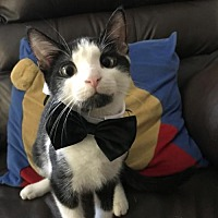 Adopt A Pet :: John Wall - Herndon, VA