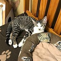 Adopt A Pet :: Addison - Byron Center, MI