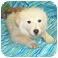Photo 3 - Golden Retriever/Chow Chow Mix Puppy for adoption in Murphysboro, Illinois - Snorkle