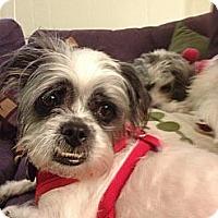 Adopt A Pet :: Thistle - Mt Gretna, PA
