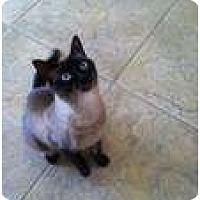 Adopt A Pet :: Bon Bon - Jacksonville, FL