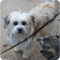 Adopt A Pet :: benji - dewey, AZ
