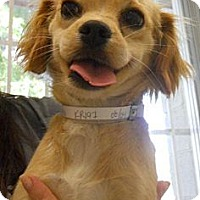 Adopt A Pet :: Sapphire - Winchester, CA